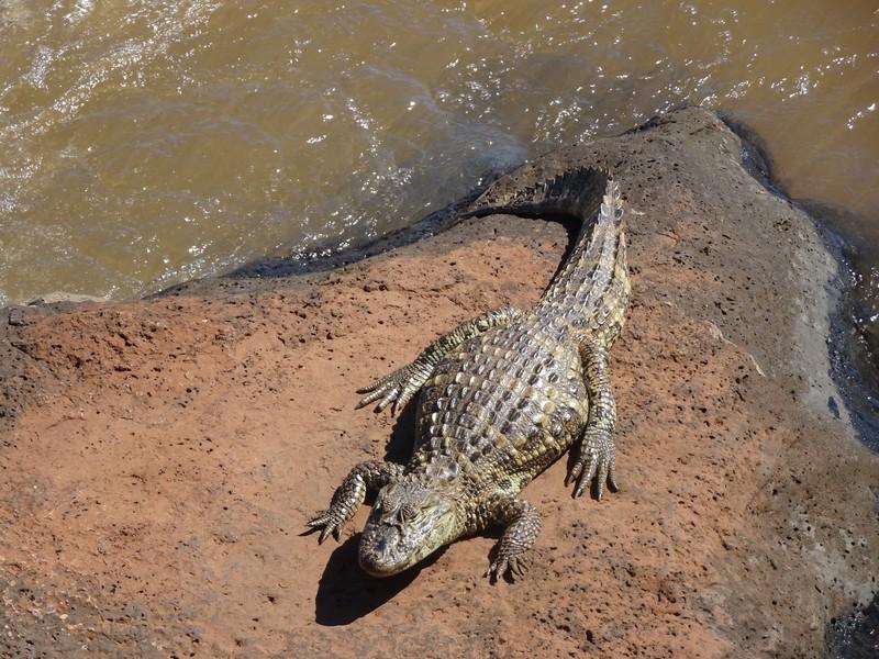 Iguacu Brazil - Cayman