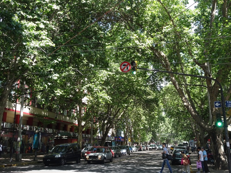 Mendoza - Around town centre - typical leafy street