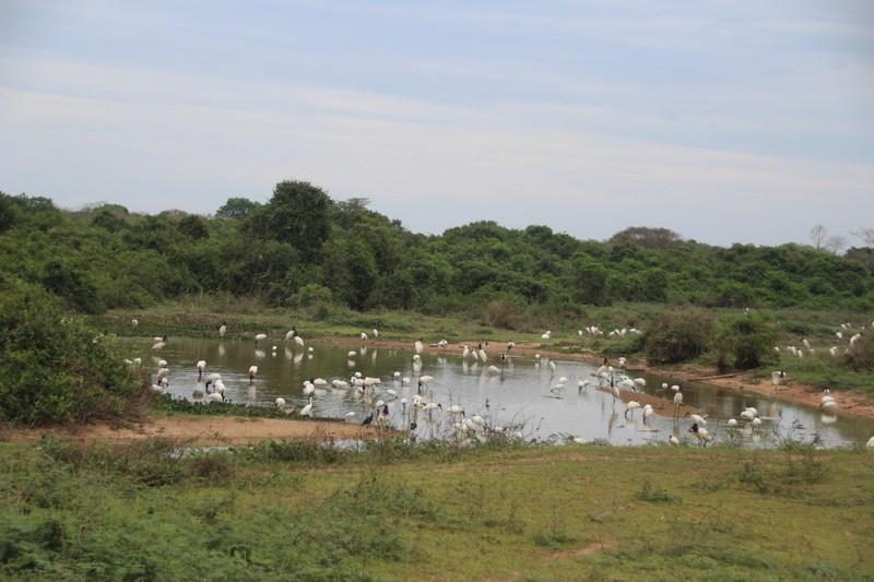 Pantanal Extreme Tour - Pantaneira Highway - Typical scene