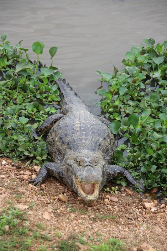 Pantanal Extreme Tour - Pantaneira Highway - Cayman