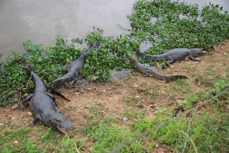 Pantanal Extreme Tour - Pantaneira Highway - Caymans