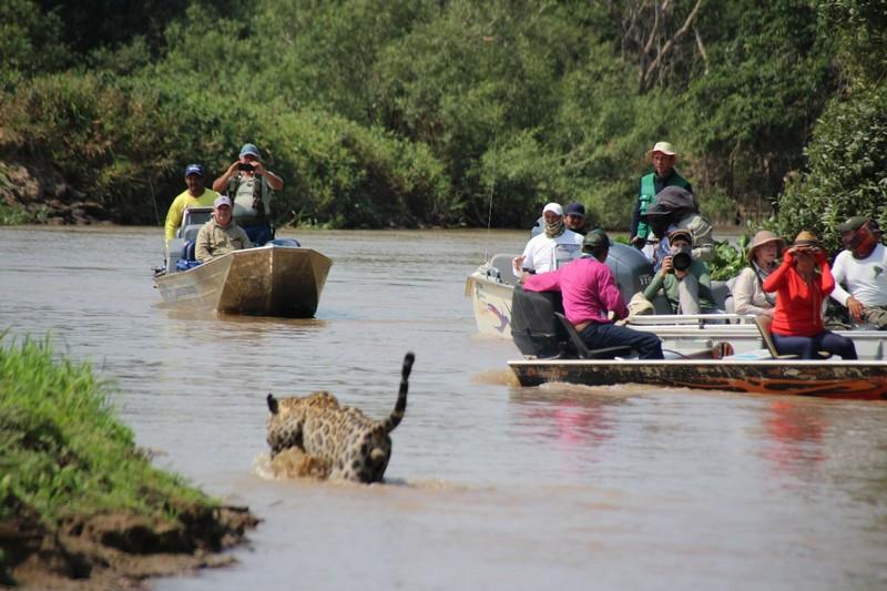 Pantanal Extreme Tour - Day 4 - Mick Jaguar