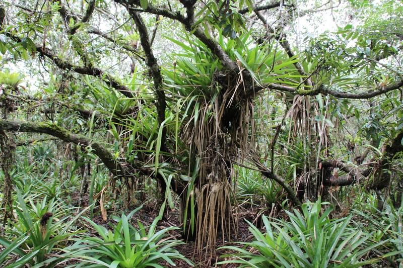 Vegetation on Brasilia to Praia Grande trail