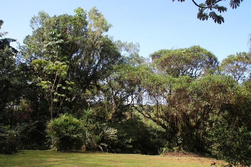 Pousada Cabanas do Curupira - View from breakfast area on last morning (sunny!)