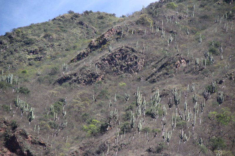 On the way to Cafayate - lots of Cactus