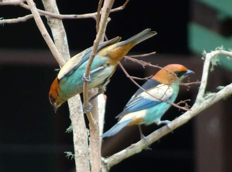 Multicoloured  birds at feeder near embarcation quay