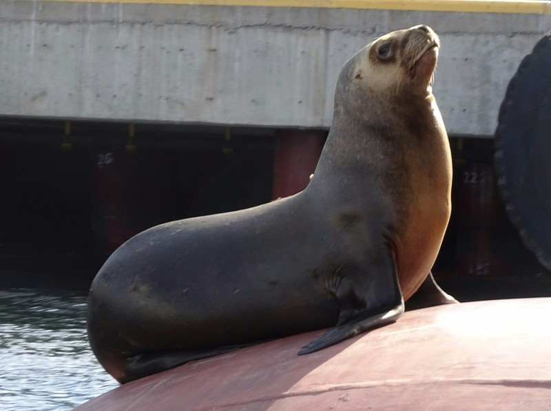 Harbour tour - Sealion (Female posing!)