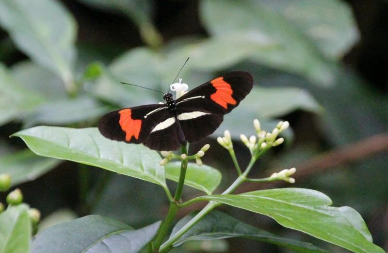 Butterfly on Brasilia to Praia Grande trail