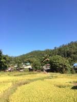 Rice Farm Pai