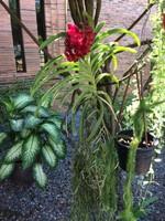Orchids at Sukhothai Heritage Resort