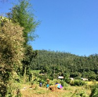 Working at Rice Farm