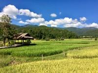 Green Rice Farm Pai