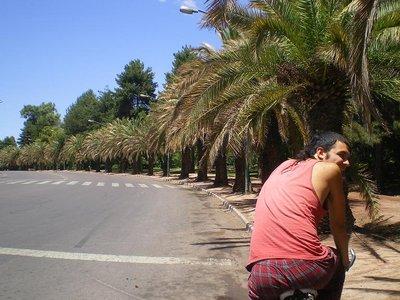 leo_palm_trees.jpg