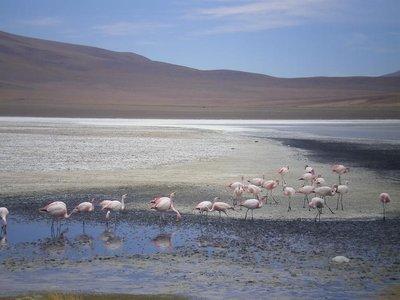 lots_flamingos.jpg