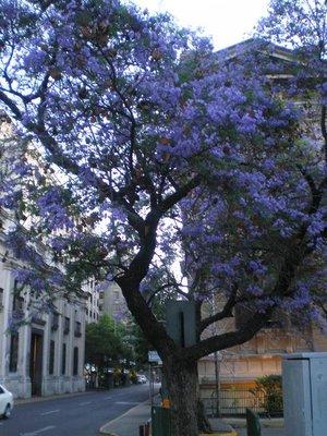 purple_flowers1.jpg