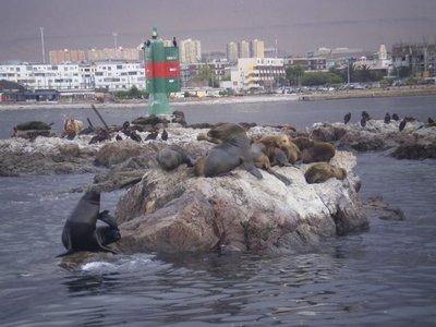 sea_lions_colony.jpg
