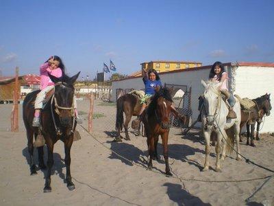 serena_horses.jpg