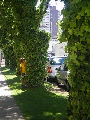 vi_a_trees.jpg
