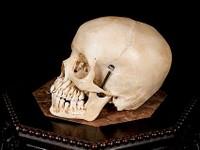 Human Skulls for Sale