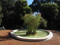 Bamboo pool