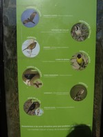 Information about birds you can see at the Ecological Reserve