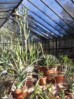 Cacti greenhouse