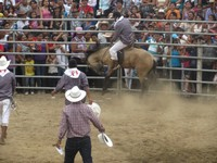 Staying on a bucking mule, Rodeo Montubio