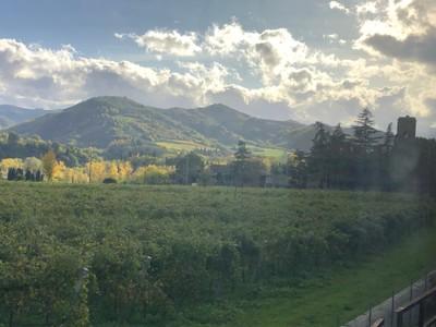 Vineyards near Brisighella