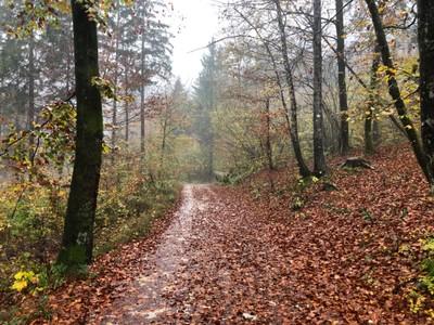 Track from Zlatorog campground up to Slap Savica waterfall