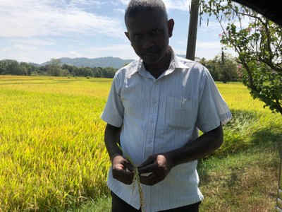 Savan and a rice stalk