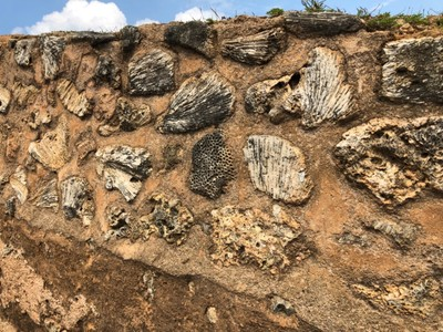 Shells and coral inlaid in Galle Fort walls