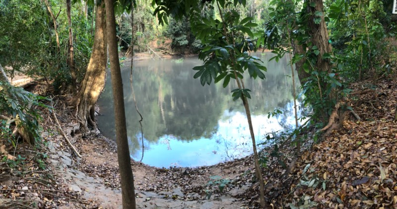 Royal Pond in Udawattakelle Forest
