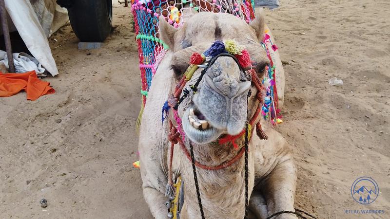 large_camel.png