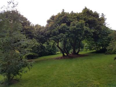 Penrhyn_gardens7.jpg