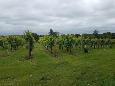 Winery_1.jpg