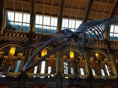 natural_history_museum.jpg
