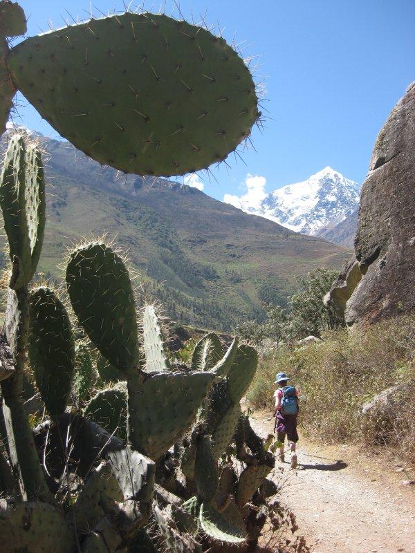 Cactus & Snow