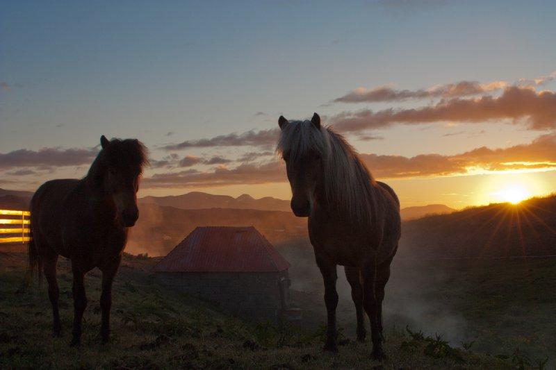 Midnight horses
