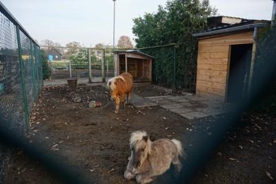 11_20 Farm ponies