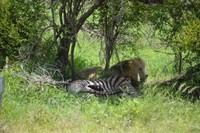 On Safari with Safari Nights Africa