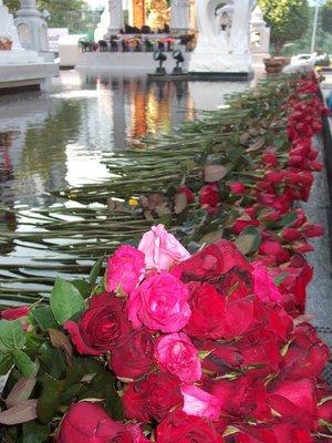 Stream of Roses