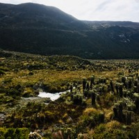 Ruisseau dans le Páramo
