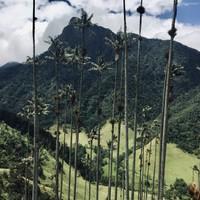 Montagnes et palmiers de cire