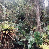 Bosque alto andino