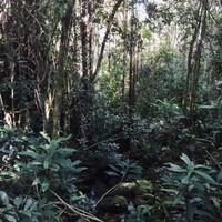 Début de la randonnée – forêt