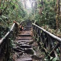 Chemin dans le bosque alto andino