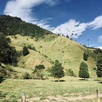 Montagnes verdoyantes