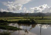 Ricefileds in Luang Namtha