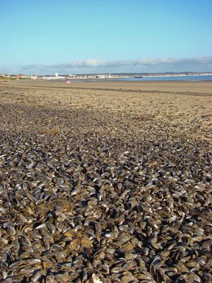 Brid-2-Mussels-Beach.jpg