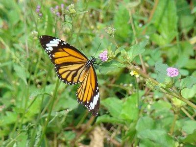 Butterfly-..ling-Fi.jpg